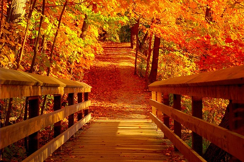 awesome bright autumn scenery - photo #31