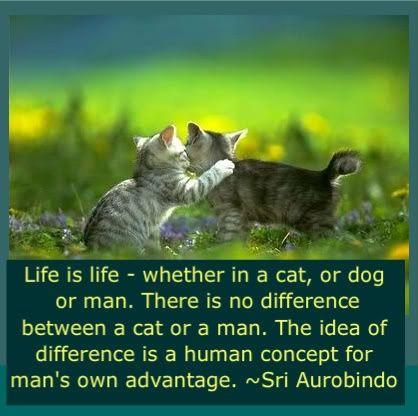 Life is Life -Sri Aurobindo