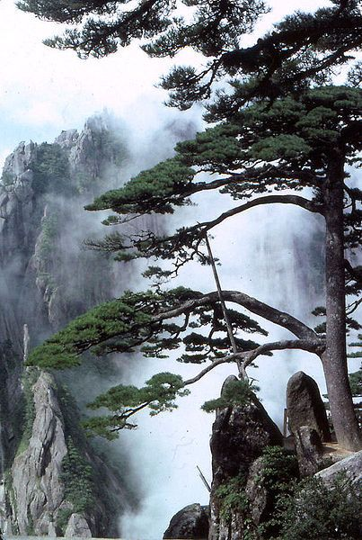 Huangshan. I can't believe how much these photographs look just like traditional Chinese landscape painting.