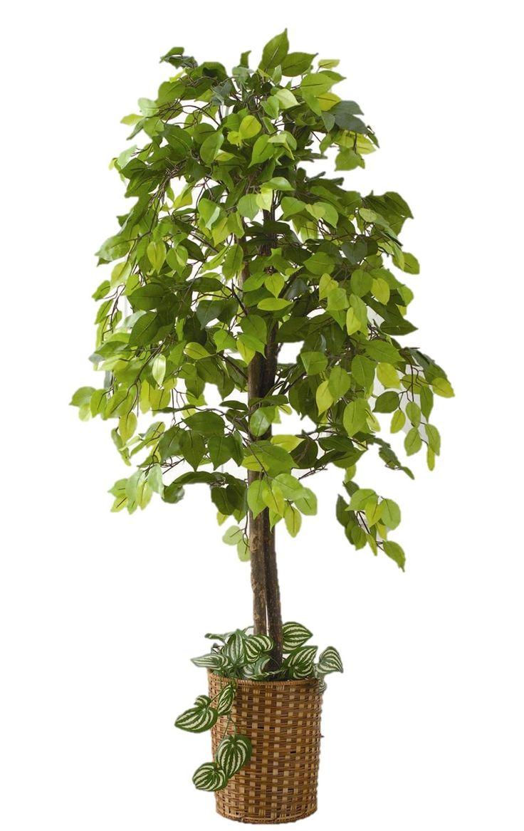 Amazon.co.jp: 観葉植物 ベンジャミン(竹カゴ付き): DIY・工具