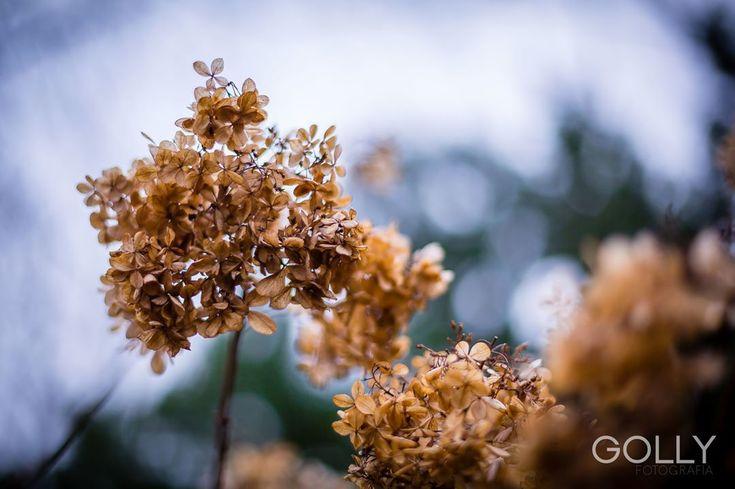 Coś pięknego dla Was 😊 #natura #wiosna #zima #hortensja #hydrangea #nature #natural #naturephoto #naturephotographer #naturelovers #winter #spring #flower #tree #beautiful