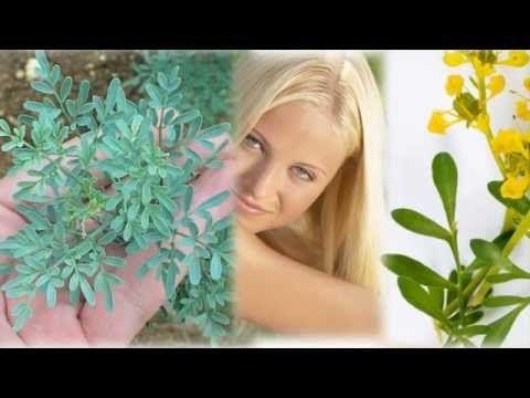 Para que sirve la ruda - Propiedades y beneficios de la ruda planta medicinal - YouTube
