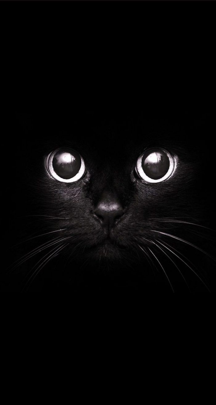 Cute Black Cat Wallpaper Iphone Iphone Wallpaper Hipster Animal