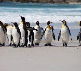 Stanley, Falkland Islands Shore Excursion  Volunteer Point