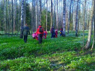Paljon vinkkejä ja linkkejä lasten luontoliikuntaan
