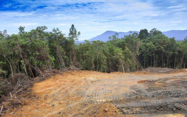 La deforestazione causata dall'Olio di Palma L'impatto ambientale causato dalla coltivazione delle palme da olio provoca conseguenze a livello globale preoccupanti. Innanzitutto la palma produce frutti solamente per circa 30 anni, inoltre le fo #deforestazione #oliodipalma #indonesia