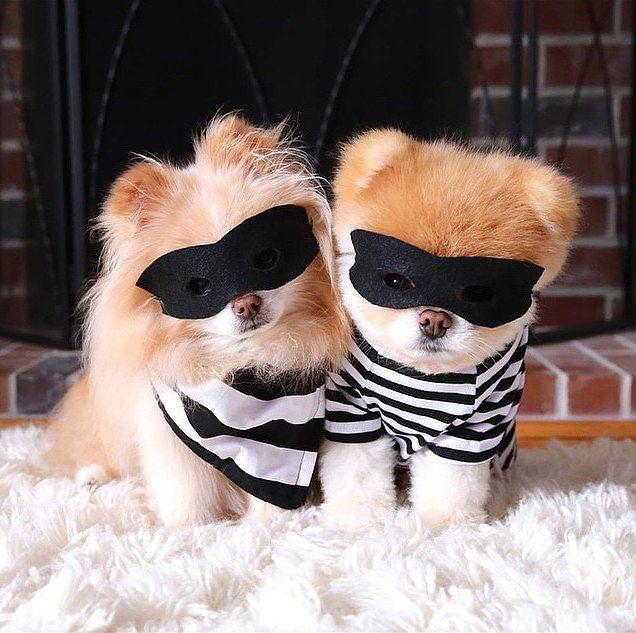 42 best Pom Costumes images on Pinterest