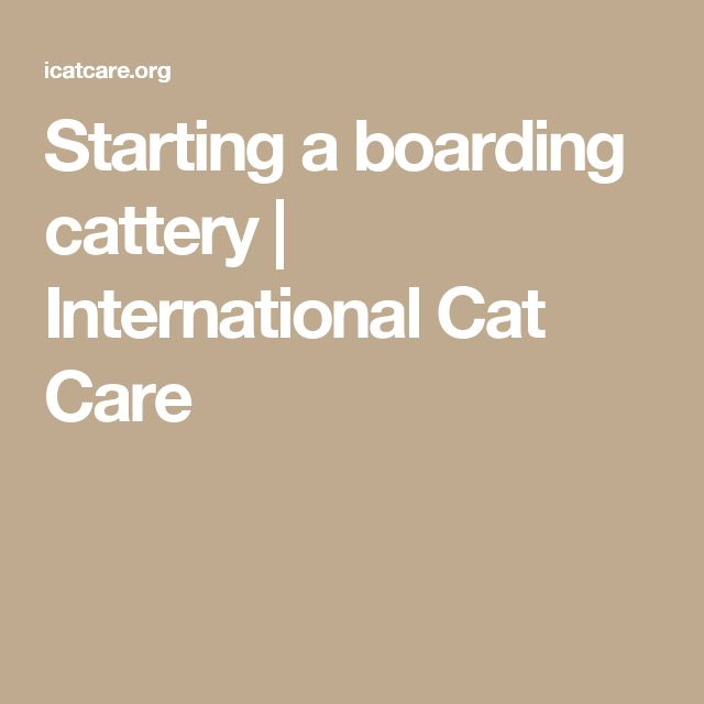 Starting a boarding cattery | International Cat Care