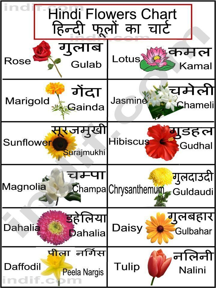 Flowers In Hindi Leiden University Hindi Hindi Taal En Zuid Aziatische Cultuur Aan De Universiteit Leiden Flower Chart Hindi Language Learning Hindi Alphabet