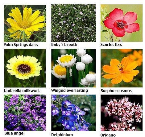 Neat article and list of 57 annual wildflowers.