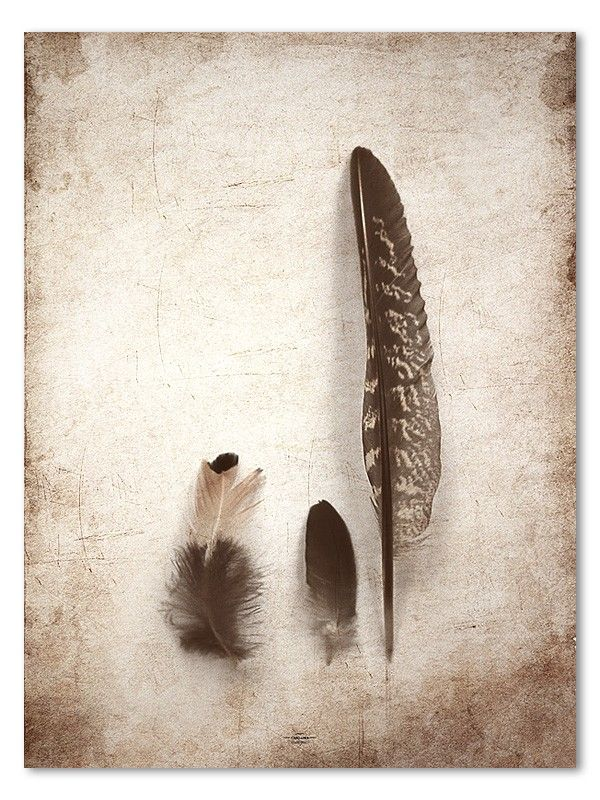 Three feathers - Caro-lines #nordicdesigncollective #carolines #feathers #feather #threefeathers #swedishdesigner #poster