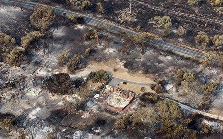 Πυρκαγιές καίνε μερικά από τα αρχαιότερα δέντρα του κόσμου