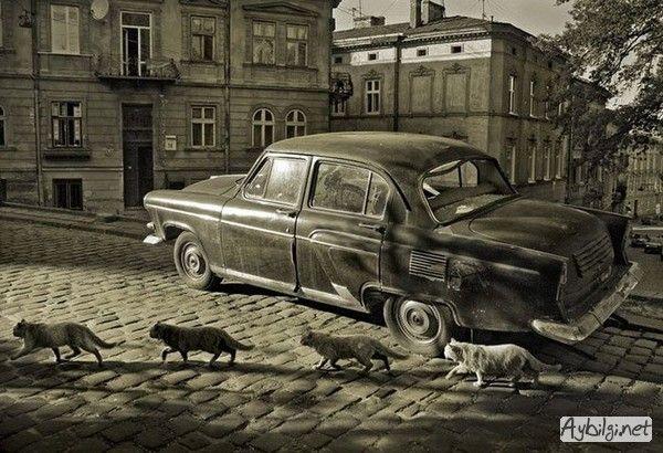 Eski model araba fotoğrafları - eski arabalar 6