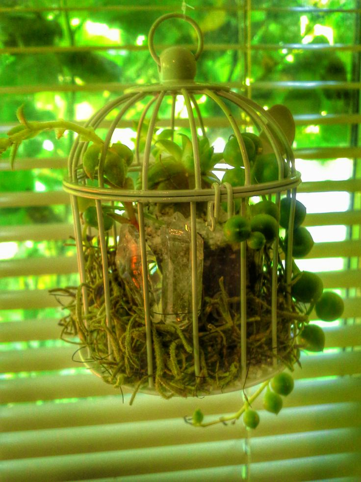 """Miniature Bird Cage, 2 1/4"""" D x 3"""" H, created with a string of Succulent Pearls, a Rosette and dazzled with a couple of Crystal Points. Watering dropper included..............$35.00 deansbaskets@gmail.com 604.603.5829 *browse my Facebook Page! :)"""