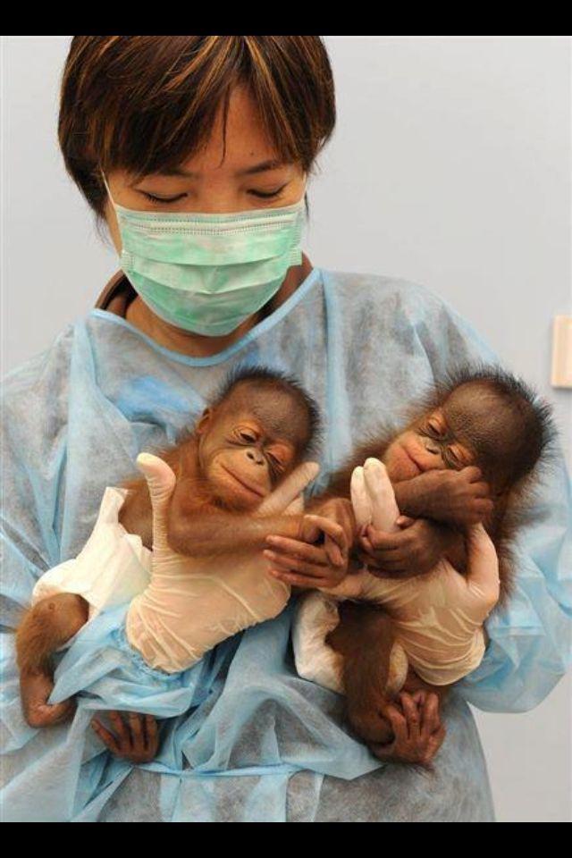 Monkey babies. Who says monkeys aren't cute??