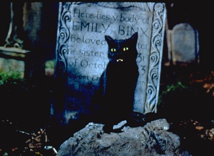 Cats, cats, cats. We love cats.  And the most awesome of all the cats (in our humble opinion) is the black cat.
