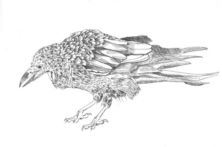 rook, ink illustration