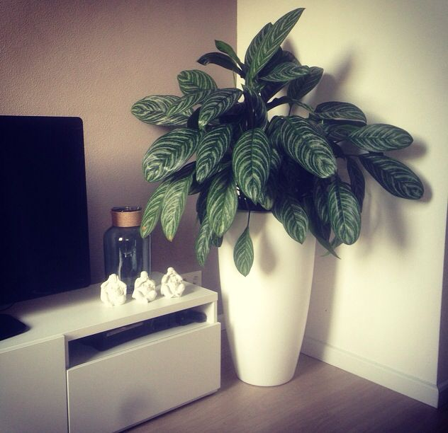 perfect spot for the elho pure soft round high, thanks for sharing! #elho #pure…
