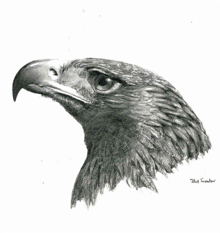 how to draw a realistic bald eagle head