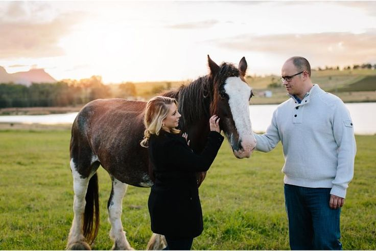 couple patting horse