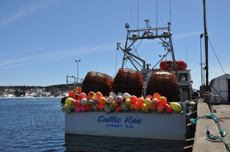 a crab boat in Louisbourg Cape Breton unable to go out due to the ice blocking the harbours entrance