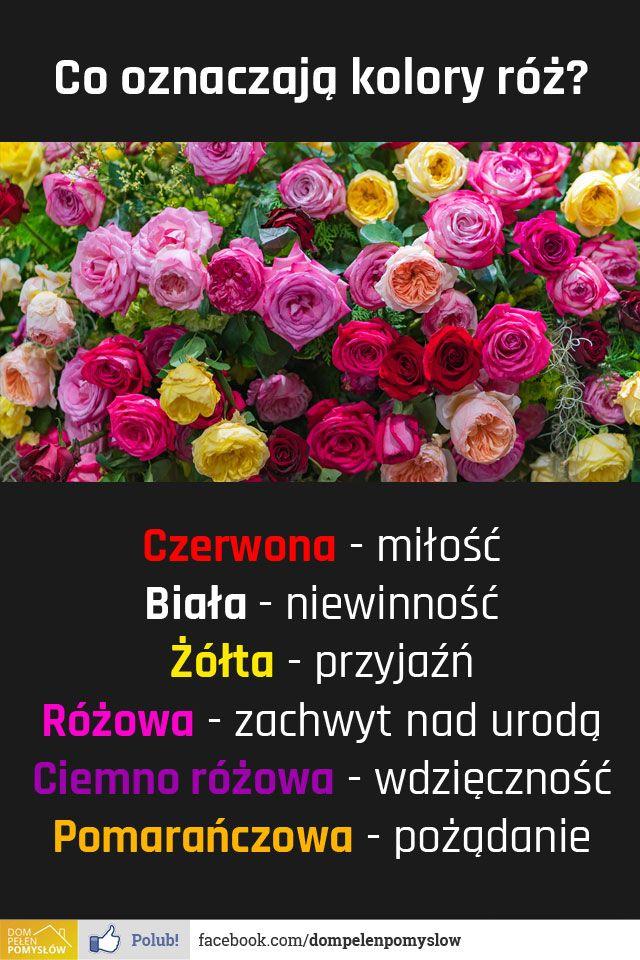 Co Oznaczaja Kolory Roz Kliknij I Zobacz Pelne Opisy Rose