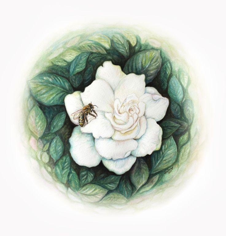 Gardenia jasminoides / acuarela