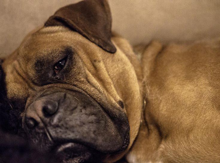 Sleepy Pup http://ift.tt/2BBuXoD