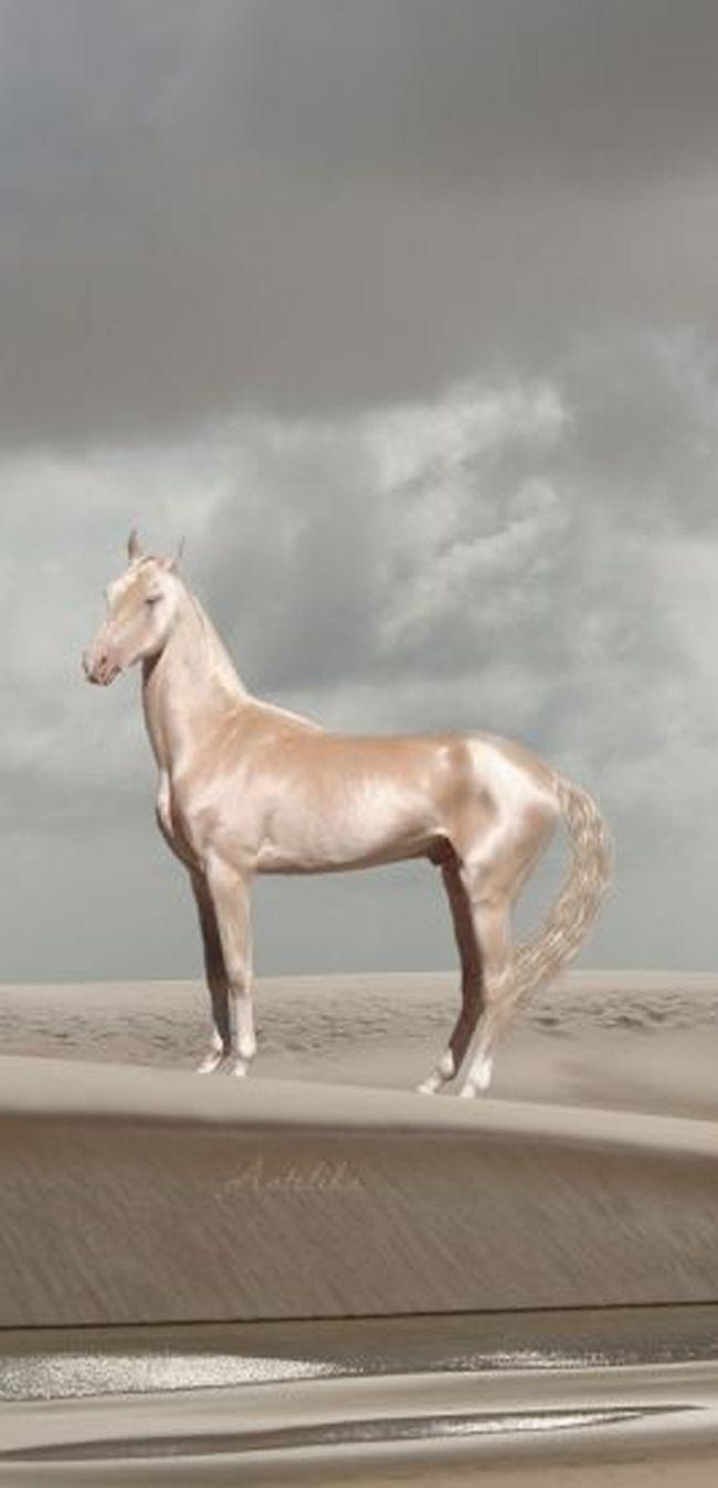 simply beautiful horse