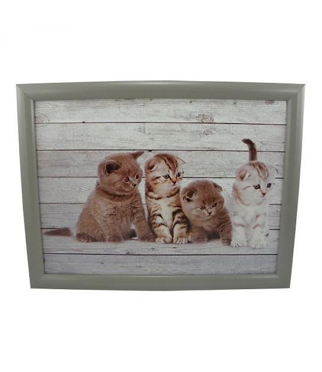 Laptop Kussen Of Schootkussen Grijze Kittens Kussen Kittens Dieren