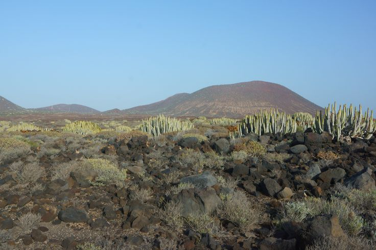 Between Palm-Mar and Faro de la Rasca / Tenerife