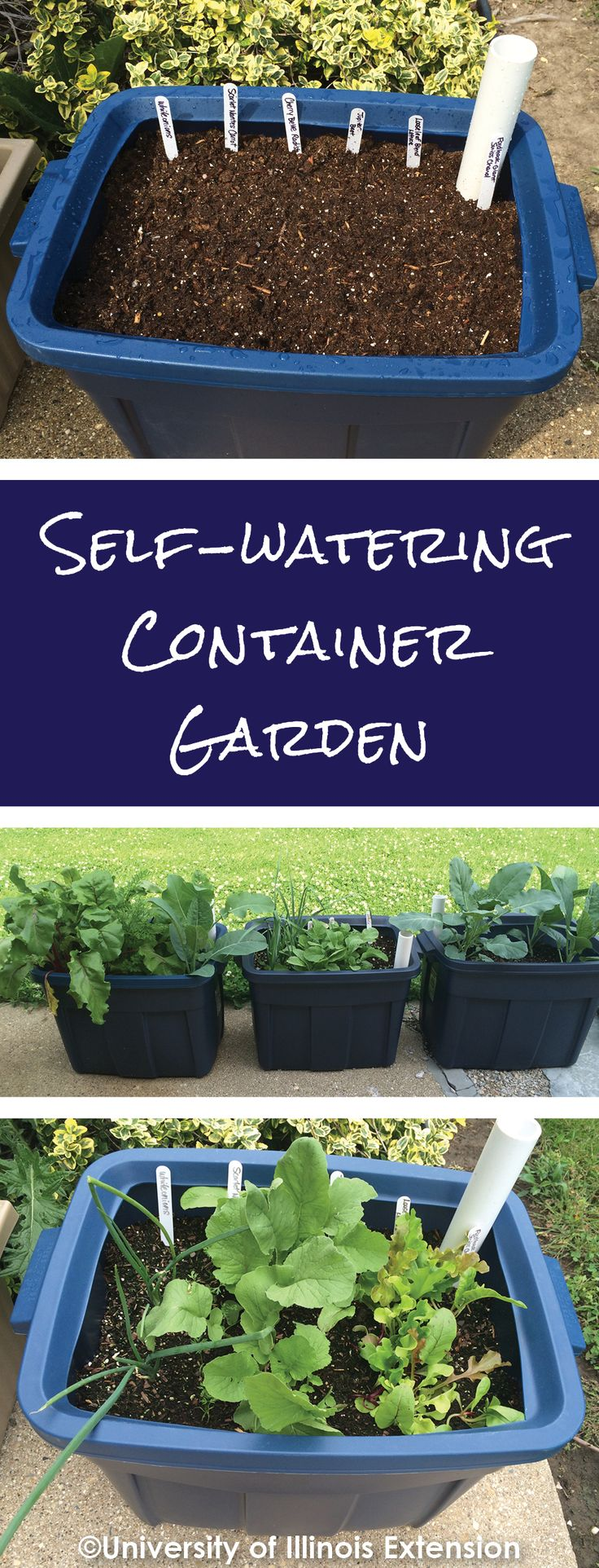 Want a garden but have zero space and no time for daily watering? Make one of these easy DIY self-watering containers and have beautiful flowers or fresh veggies year-round!  Learn more about container gardens at http://web.extension.illinois.edu/dmp/eb344/.