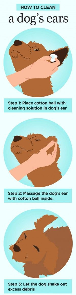 How to clean a dogs ears