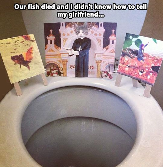 Our fish died...
