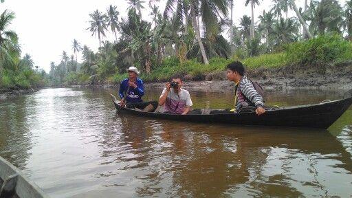 Menikmati hamparan kelapa di Parit Jelutung 4 Desa Tanjung Lajau