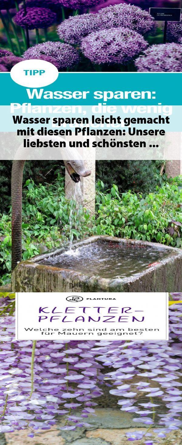 Wasser Sparen Leicht Gemacht Mit Diesen Pflanzen Unsere Liebsten Und Schonsten Pflanzen Fur Den Garten Die Nicht Viel Wasser Pflanzen Garten Pflanzen Wasser