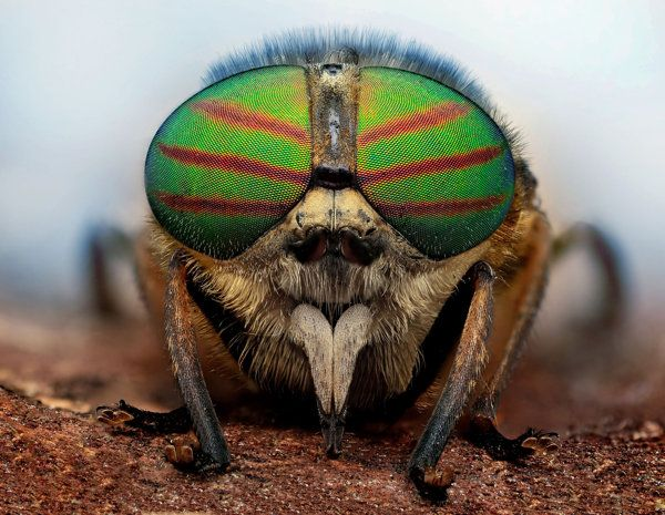 Wrap your eyes around these stunning shots of insects which look like mini Kanye wasps wearing funky shades.
