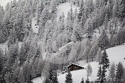 Winter landscape in the snow