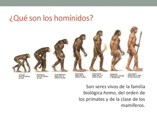 Los hom nidos hominidae son una familia de primates for Cuales son los tipos de arboles