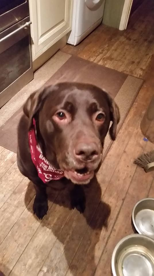 Staff at Essilor bought bandanas for their four legged friends! - Essilor pet pics 1