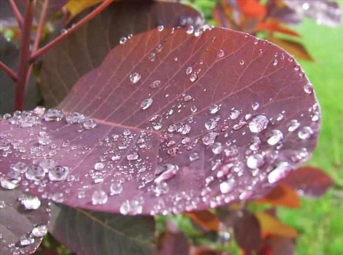 PP de las flores luego de una buena lluvia