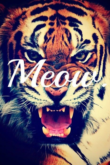 Meow: Cats, Big Cat, Animals, Meow, Quotes, Wallpaper, Random, Tigers, Things