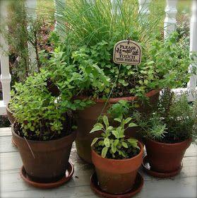 lucys garden: A POTTED HERB GARDEN!