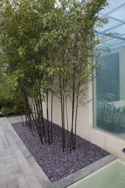 Kann ich Bambus im Kübel halten Sichtschutz garten