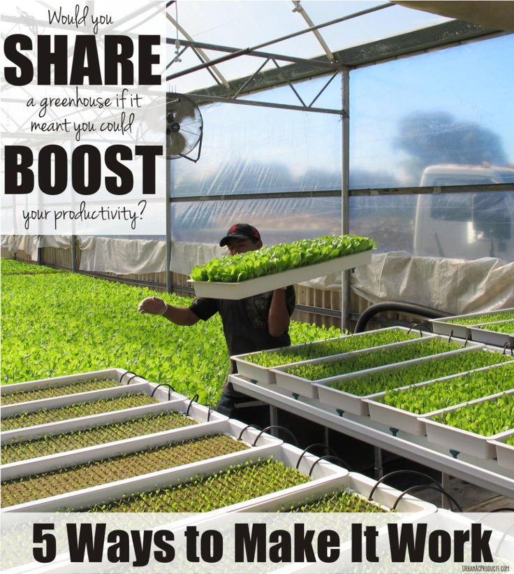 Fresh with Edge shares five ways to respectfully share #greenhouse space to boost your productivity. #Hydroponics #Aquaponics