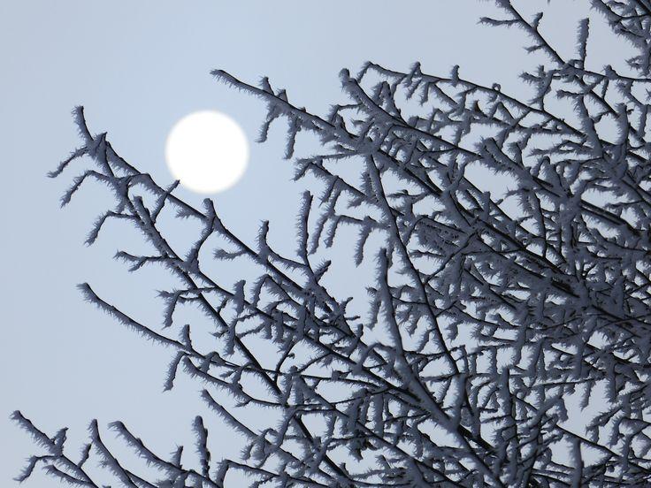 Rimfrost på träd.