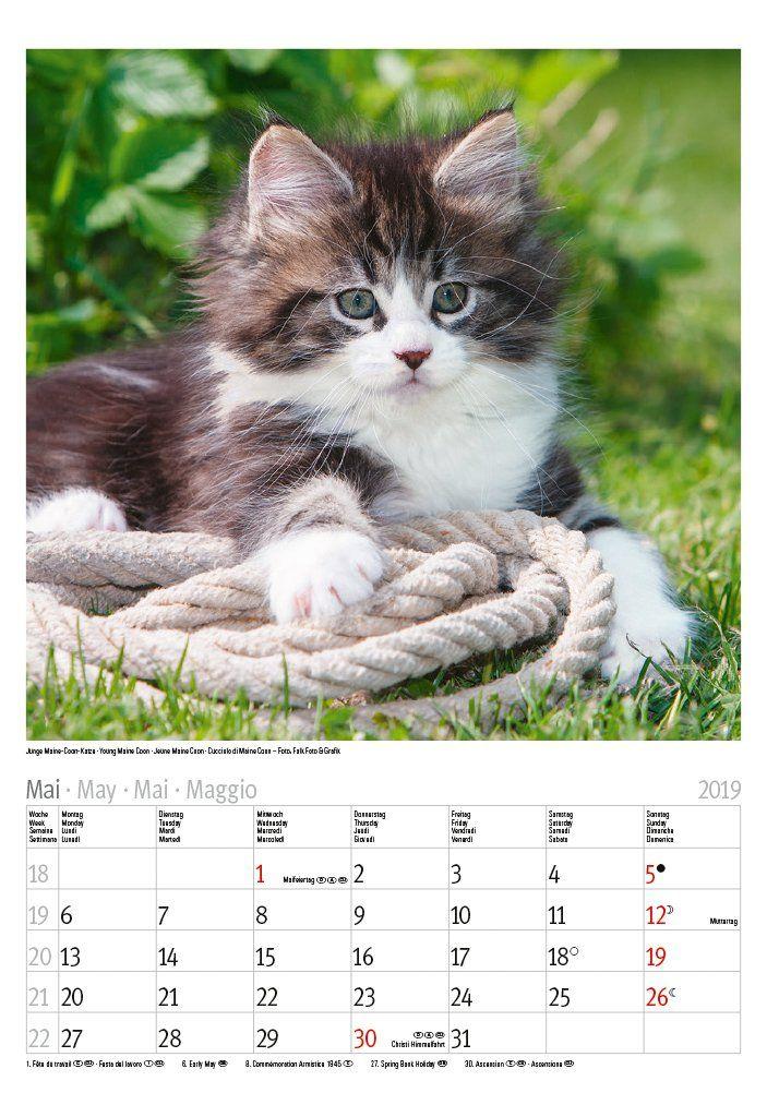 Katzen 2019 Kalender Katzen Kalender Libri E Amazon