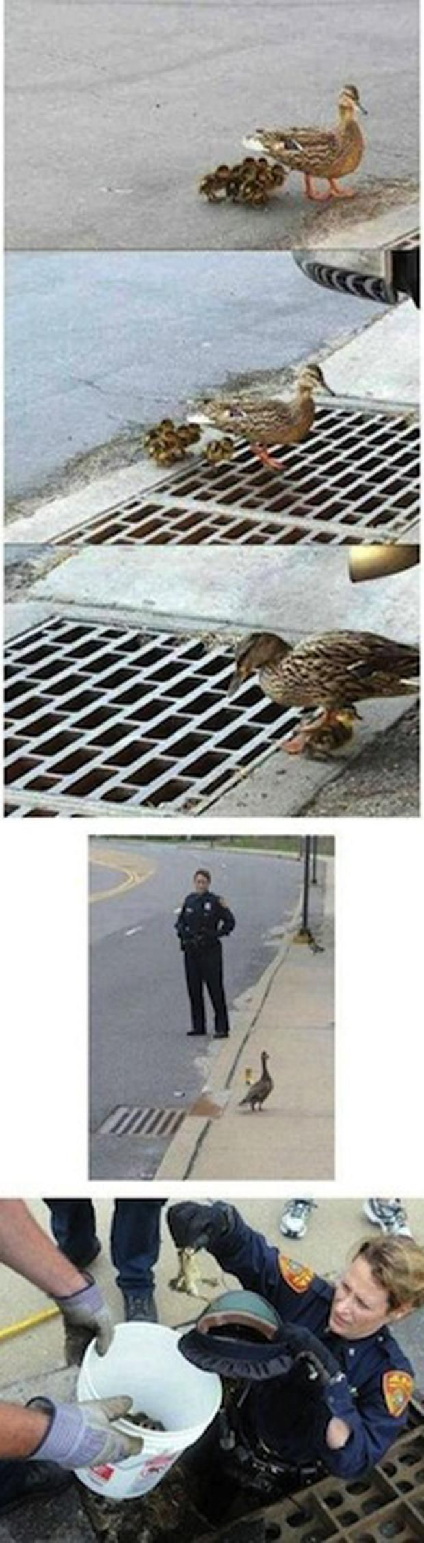 faith in humanity restored,
