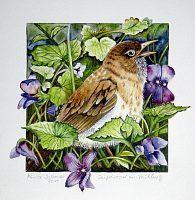 """Maria Inhoven, """"Singdrossel im Frühling"""" (34) Klicken Sie hier, um auf die Grossansicht mit zusätzlichen Informationen zu gelangen."""