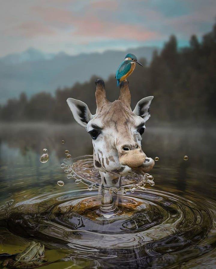 El Arte Es Natural Solo Hay Una Cosa Que Todos Podemos Pensar En Común Ojalá Fuera Real Africa Photography Amazing Pictures Animals Wildlife Animals